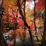 [鈴虫寺]芸能人も足しげく通う願いが叶うお寺。紅葉の季節が最高